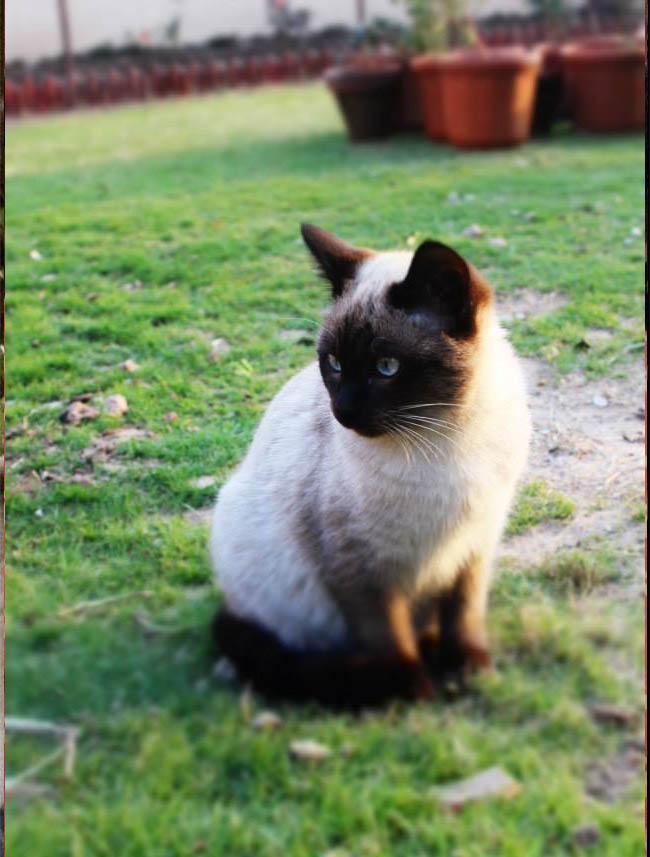 Cat 21